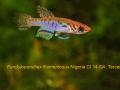 Fun-filamentosus-Nigeria-CI-2014-web-label2